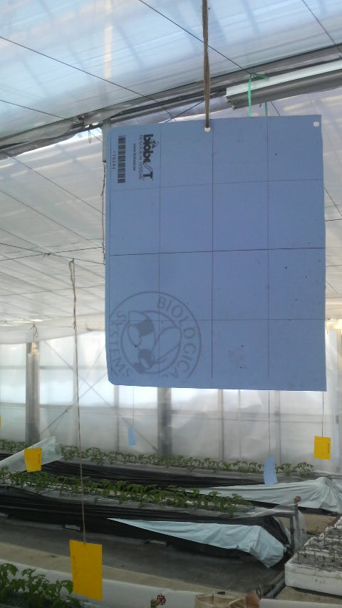 バグスキャン20110220