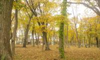 秋の公園1