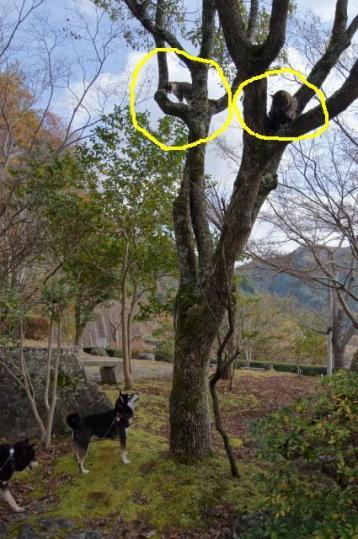 滝畑ダムの猫ちゃん