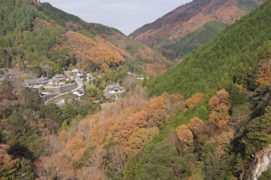 滝畑ダムの紅葉