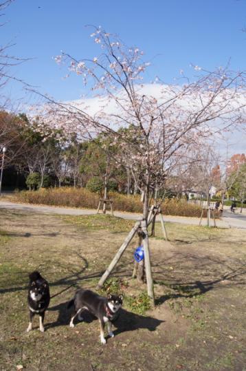 大阪城(後編)