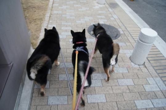 いつものお散歩の様子