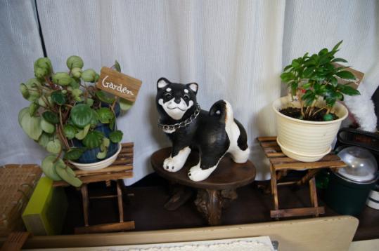 新しい家族「黒柴犬4頭飼い?」