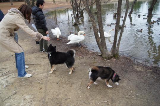 蜻蛉池公園後編