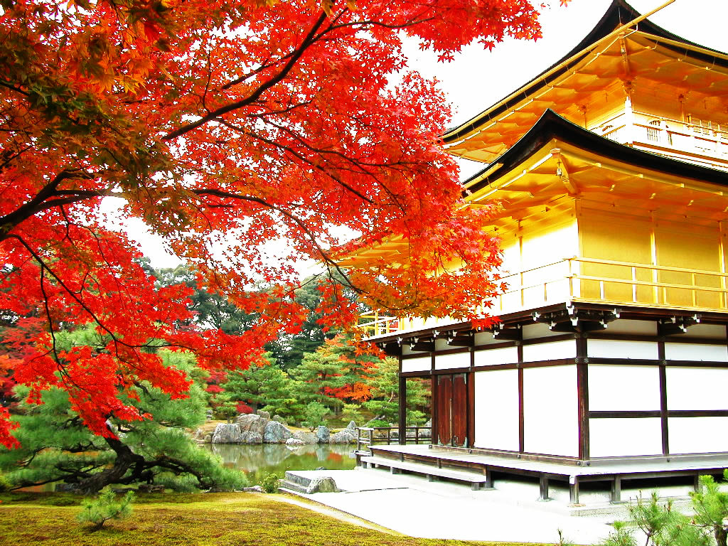 金閣寺×紅葉。