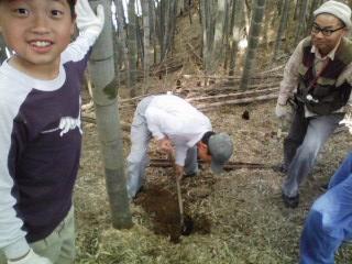 タケノコ掘り④