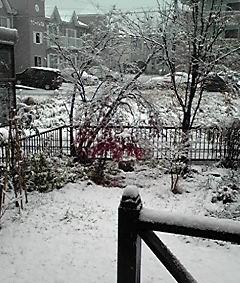 庭に雪が・・・