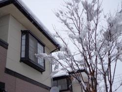 トモヤの部屋の窓と、寒そうなブナの木。