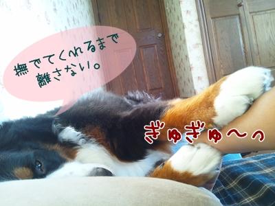 DSC_0589.jpg