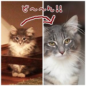 cats_20120901212018.jpg