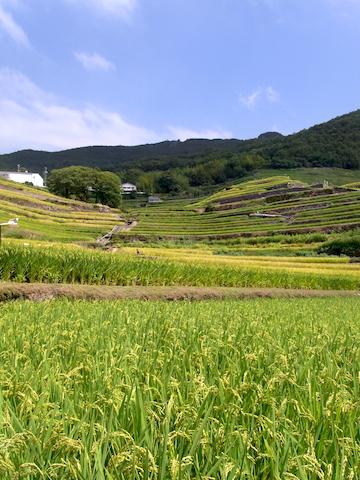 shodoshima tanada
