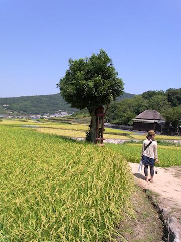 shodoshima when wood