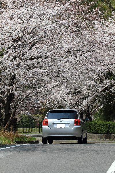Sakura2012-02