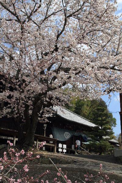 Sakura2012-05