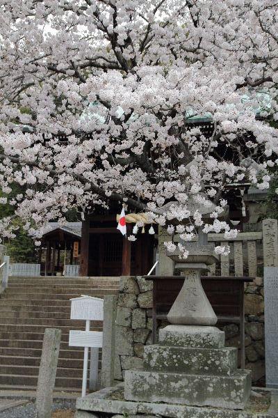 Sakura2012-06