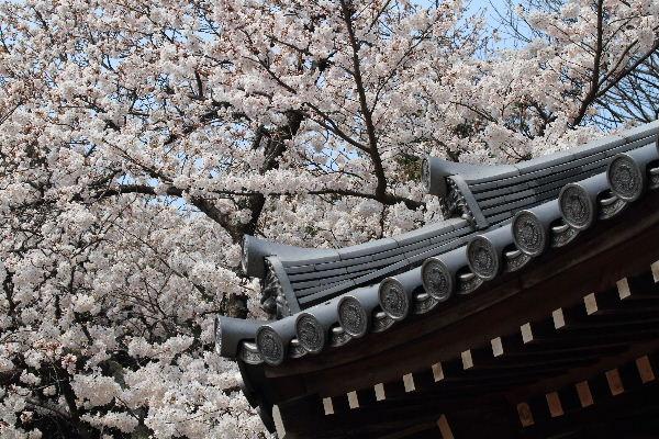 Sakura2012-01