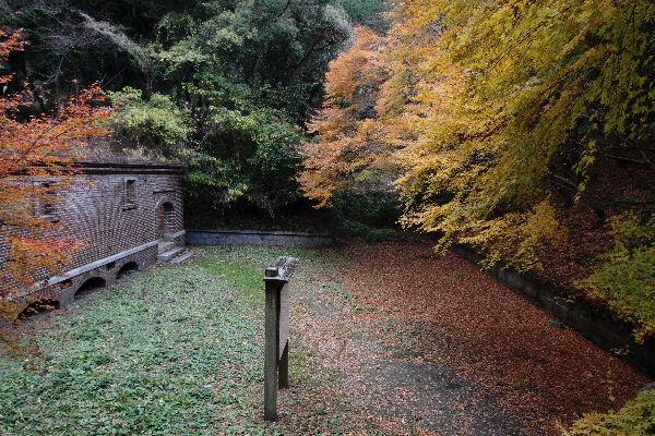 OshimaDanyaku06