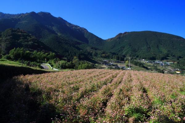 井内赤蕎麦 141019 04