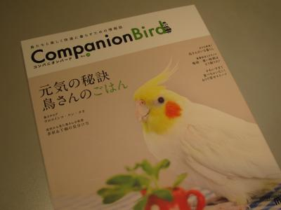 companionBird1.jpg