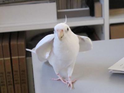 companionBird2.jpg