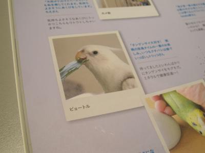 companionBird5.jpg