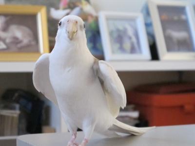 companionBird7.jpg