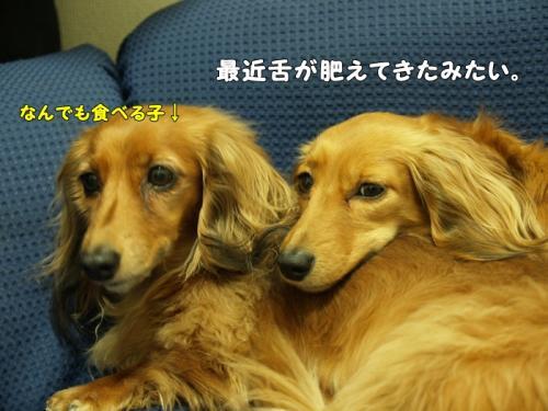 001_20110407210619.jpg