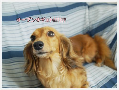 006_20110619103207.jpg