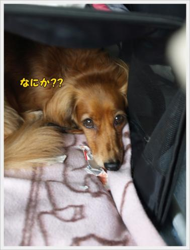 013_20110607213527.jpg