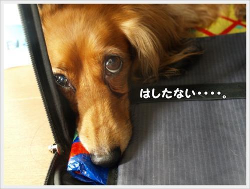 019_20110619103208.jpg