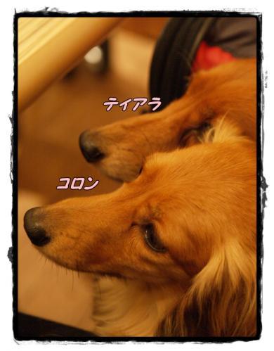 029_20110601212219.jpg