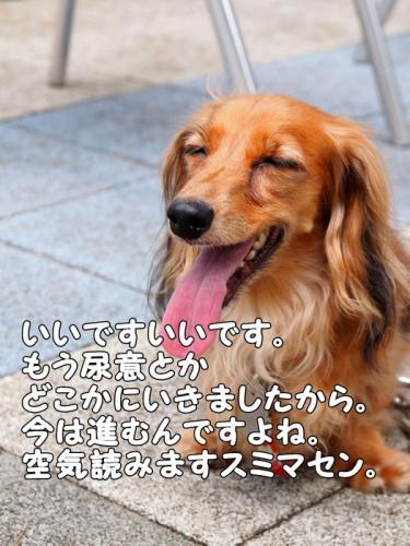 088_20110810201354.jpg