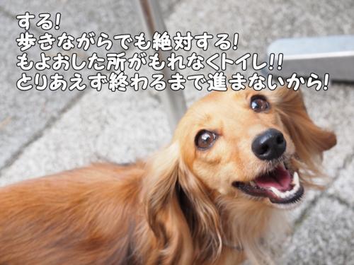 093_20110810201355.jpg