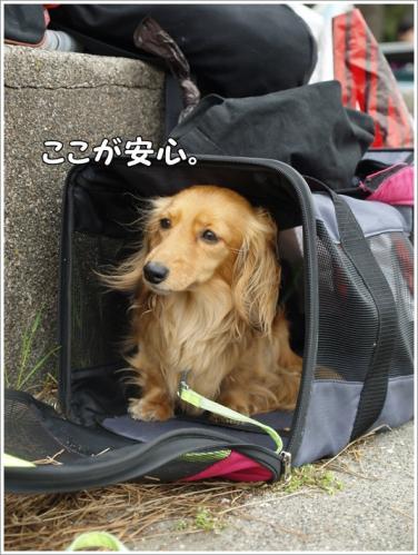 128_20110503220314.jpg