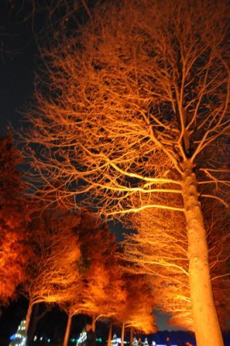 2011-12-17.jpg