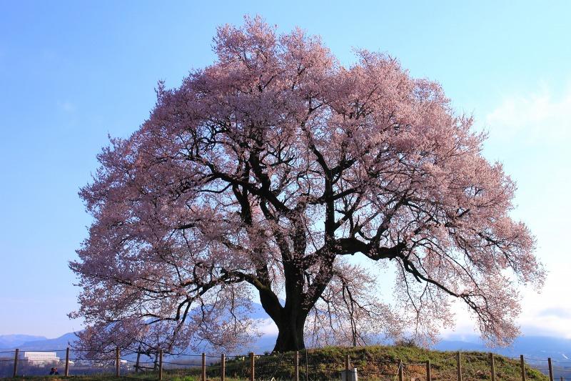 2012年4月15日 黒岳_012