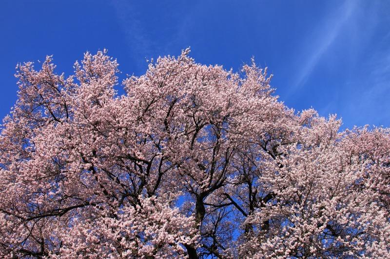 2012年4月15日 黒岳_014