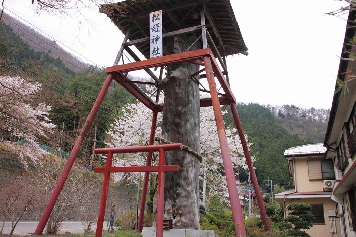 海沢渓谷_018