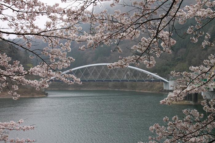 海沢渓谷_023