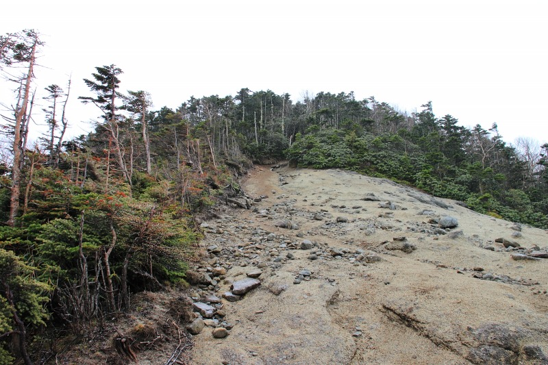 2012年6月10日 甲武信ヶ岳_022