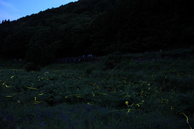 2012年6月17日'12辰野ホタル39