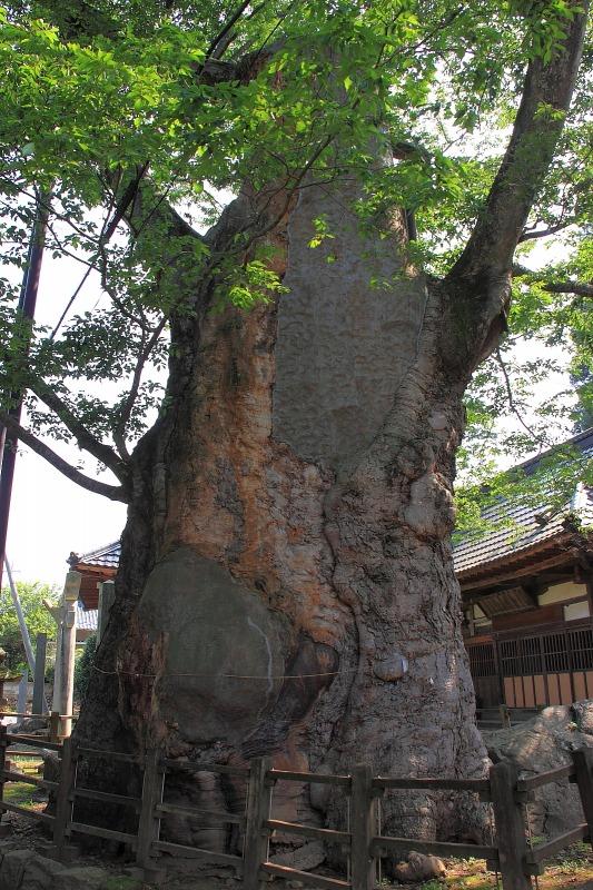 2012年7月28日 明野ひまわり015