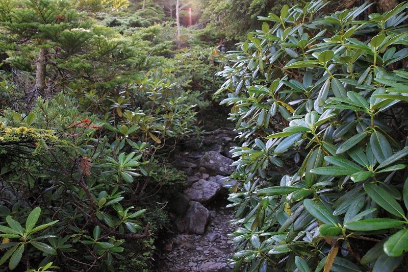 2012年8月25日 甲斐駒ケ岳_010