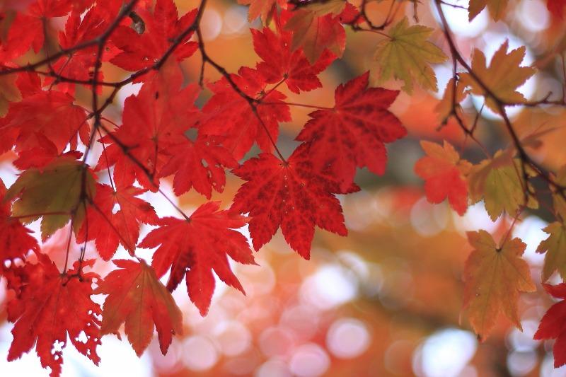 2012年10月27日金峰山~尾白川渓谷_028