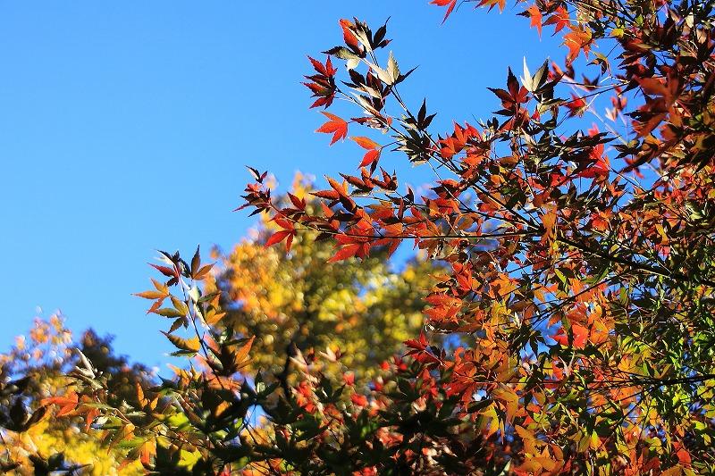 2012年11月10~11日 秋_004