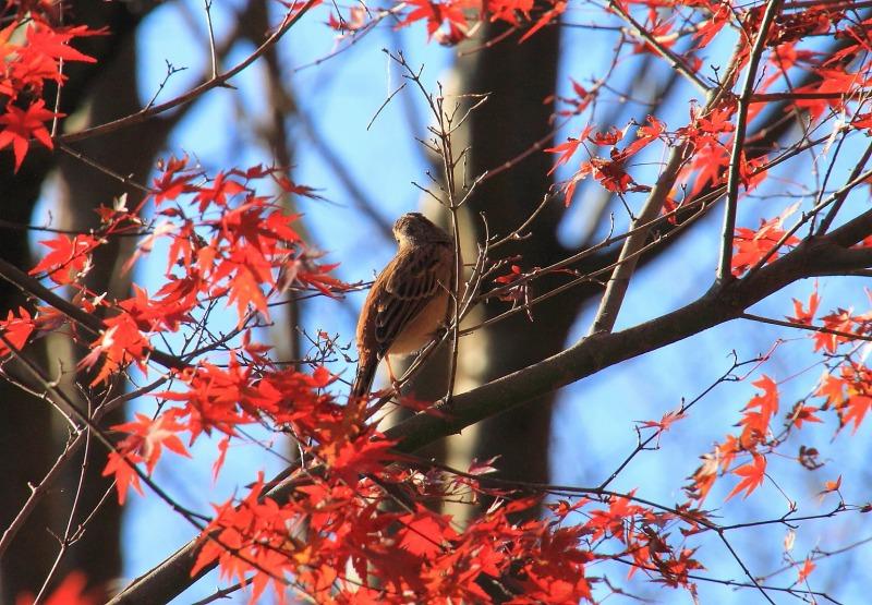 2012年11月18日高尾山~陣馬山縦走_017