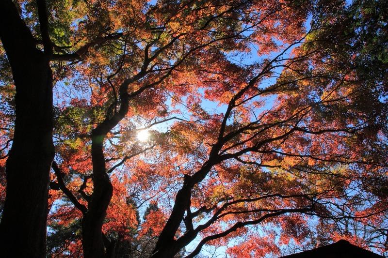 2012年11月18日高尾山~陣馬山縦走_032