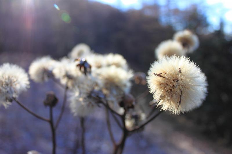 2012年11月25日 雲取山_016_2