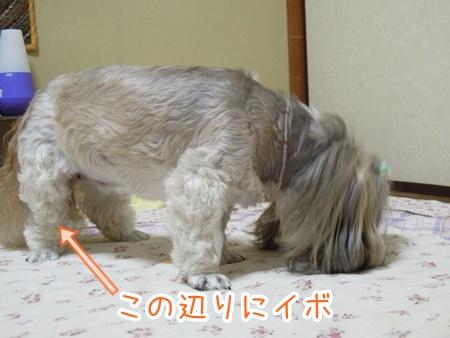 DSCN3411_20111216231756.jpg