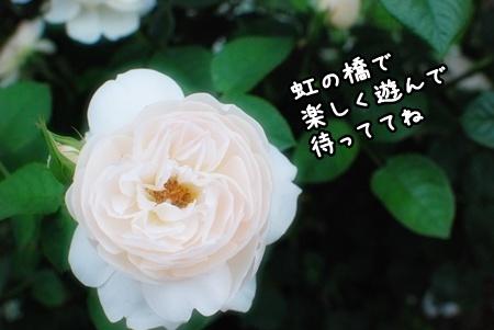 DSC_1891.jpg